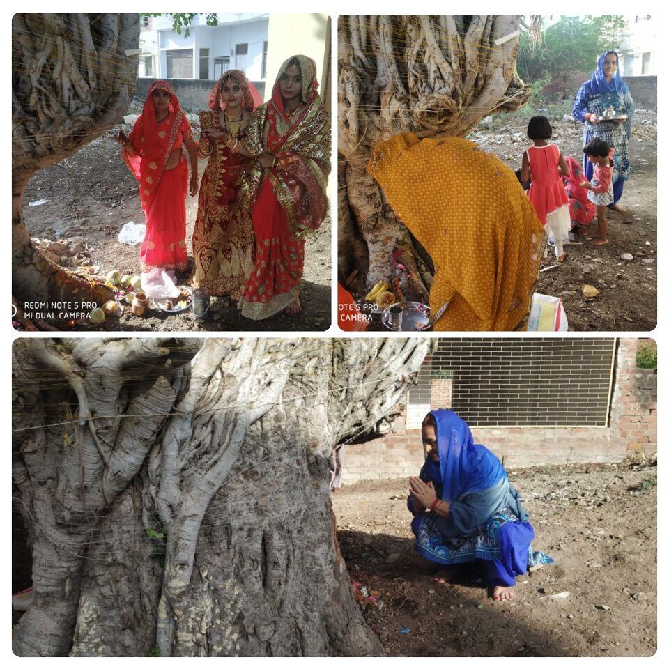 जालौन-सुहागिन महिलाओ ने वट वृक्ष की पूजा कर अपने पति की लम्बी उम्र का मांगा वरदान।