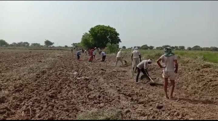 जालौन-मनरेगा के तहत100 मजदूरों को मिला काम ग्राम रुपापुर के नवनिर्वाचित प्रधान ने की शुरुआत।
